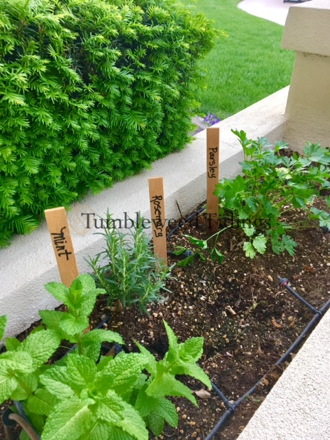 Creating a Patio Herb Garden