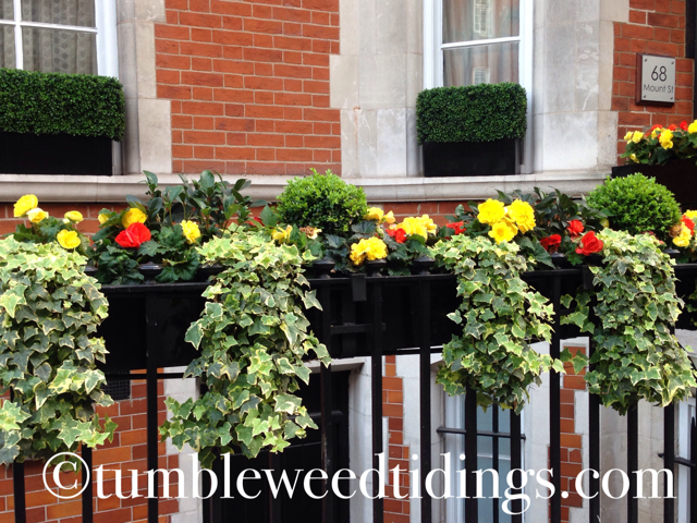 The Flowers of London…