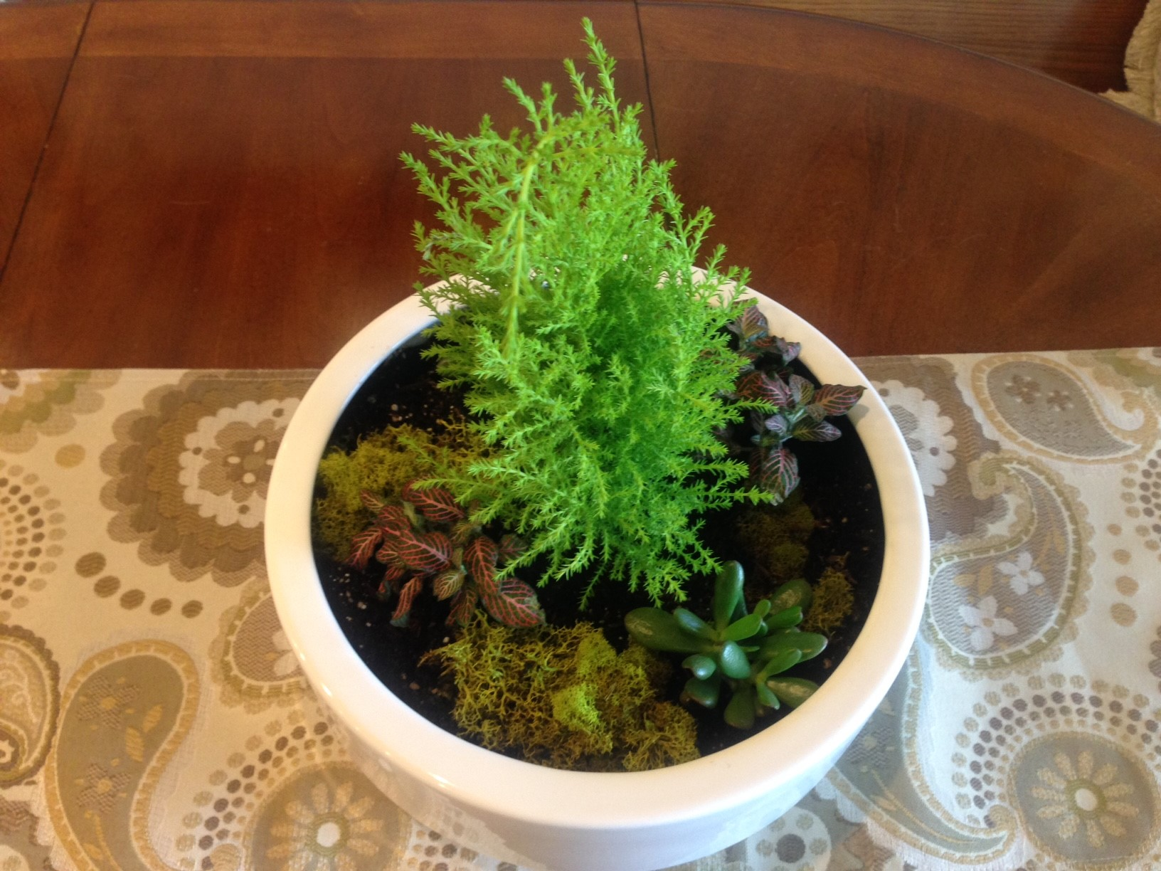 Exercising my Indoor Green Thumb…