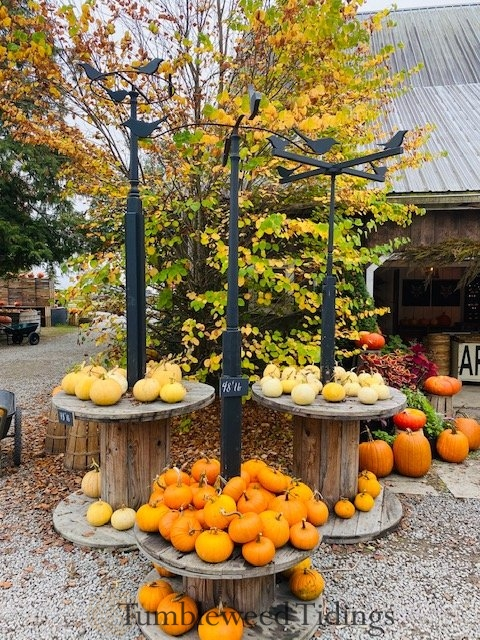 Pumpkin Farm Visit…